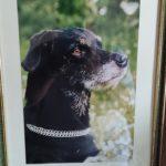 Giornata Mondiale del Cane in ufficio: la storia del cane Filippo