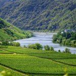 prezzi del vino Chablis