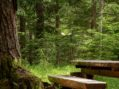 Pupille, la mostra fantasy tra i boschi delle Dolomiti