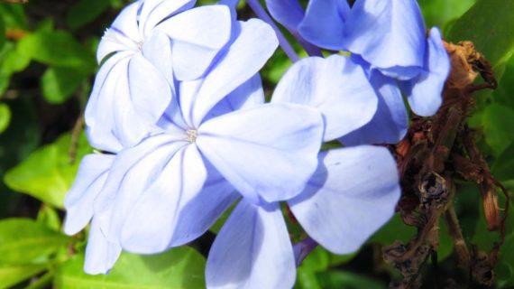 Blue Theraphy eGreen Beauty, ecco la beauty routine color alrientro dalle vacanze