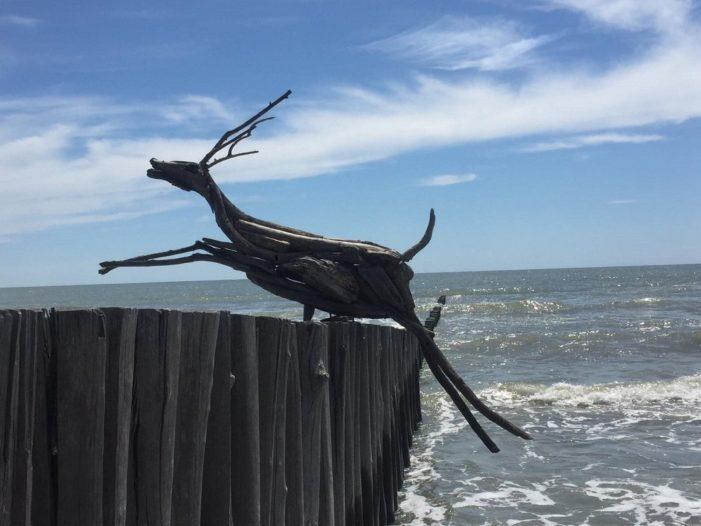 L'arte che nasce dal mare: ecco le sorprendenti sculture di legno di Enrico Menegatti
