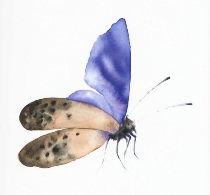 La strategia della bellezza in un viaggio nel mondo degli insetti